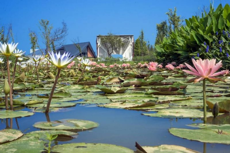 桃園市新屋區2019年農業博覽會基地水環境